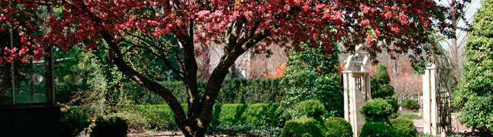 The Conservatory Garden Wedding Venue - St. Louis, MO